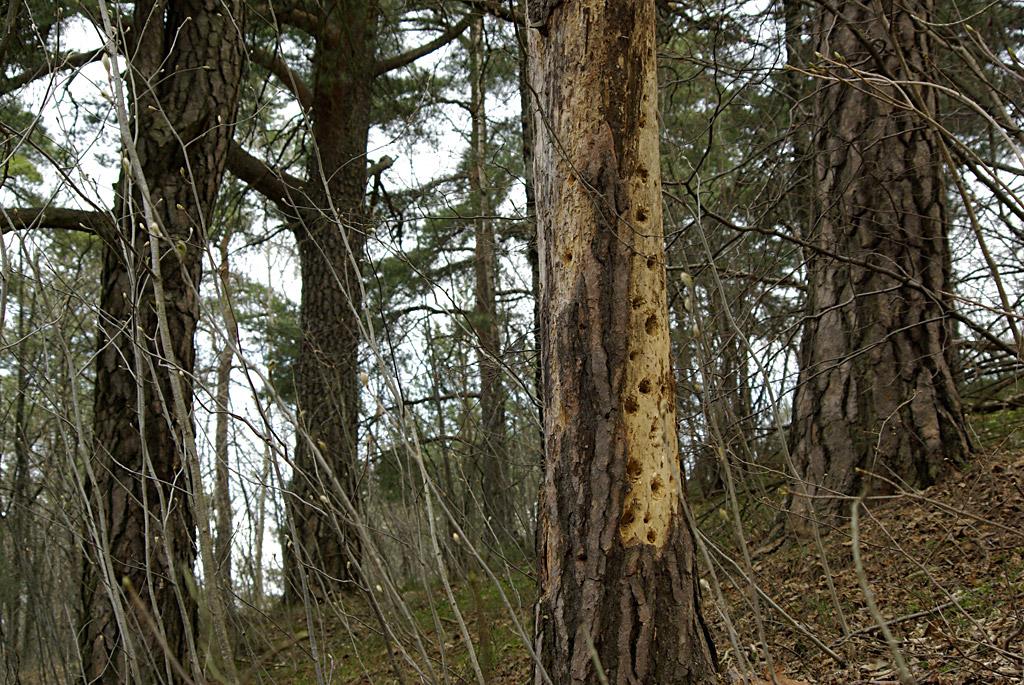Viktige og vakre trær