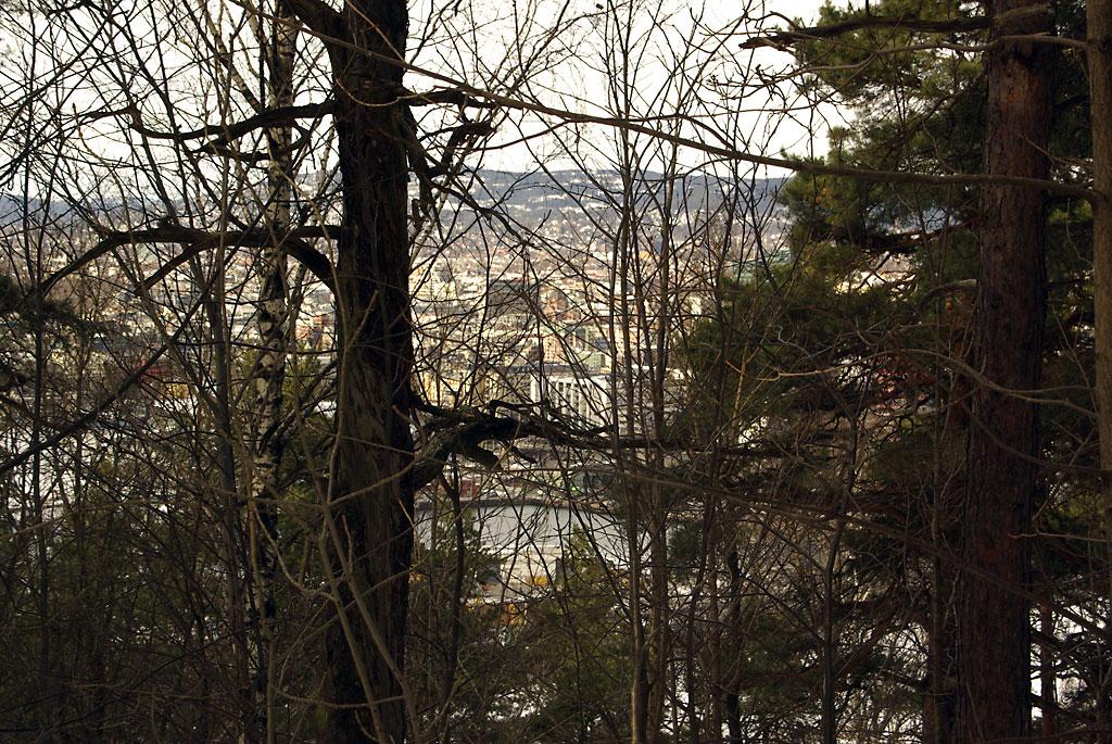 Gamle spettetrær i Utsiktsstien