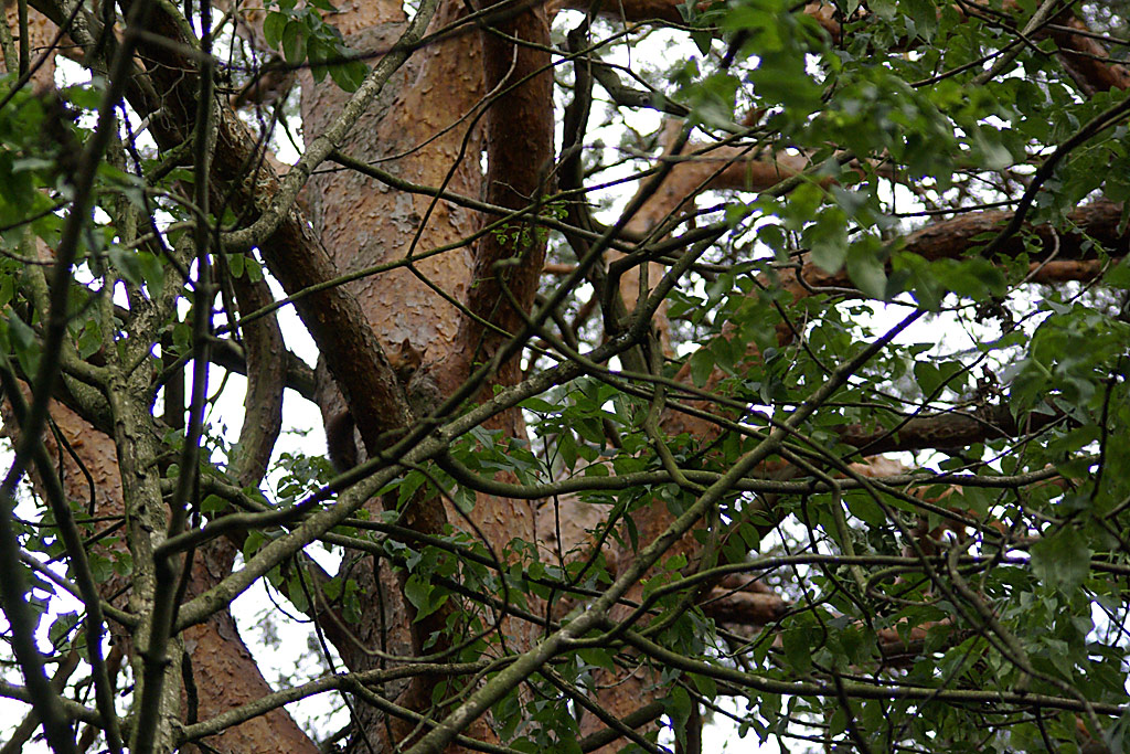 Ekorn ved den gamle steingarden
