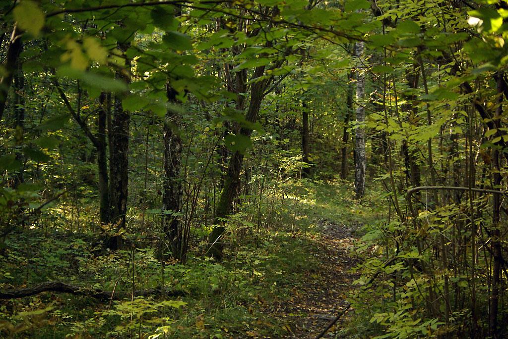 Frodig skog dekkes av vannspeil
