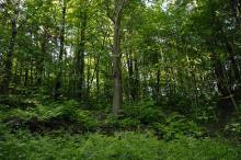 En levende grønn oase