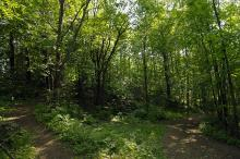 Rik skog på alle kanter