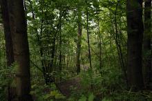 Viktig skogsmiljø ved parklommen