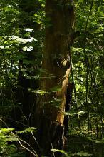 Viktig skog