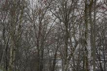 Skog med biologisk mangfold