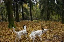 Hyttebygging og hundeliv