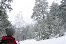 Trolsk vinterskog