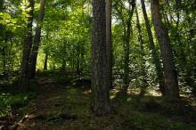 Samferdsel i biologisk viktig skog
