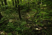 Sigevannspåvirket Lågurtskog