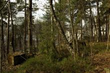 Paviljongtomt med blåbærlyng og gamle trær