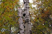 Viktige hulltrær i skråningen