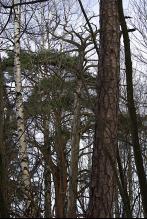 Tremix i Bøksangerskogen