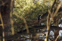Spetter og død ved i vannspeilskog