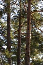 Populært boligtre i skogen